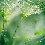 dandelion-seed-with-water-drops-2200x1467